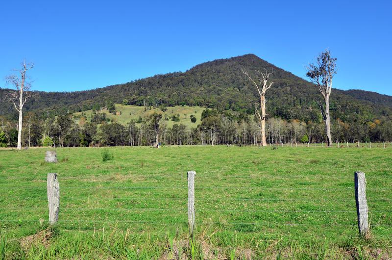 Springbrook park narodowy - Queensland Australia fotografia royalty free