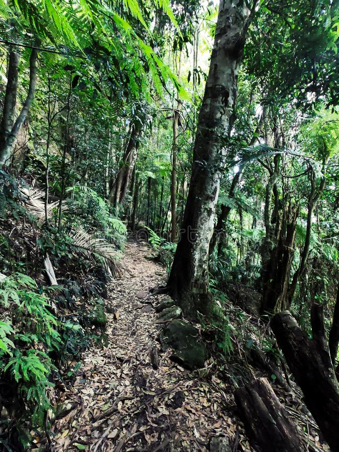 Springbrook parkerar rainforesten i Australien Trekking str?mkrets arkivfoton