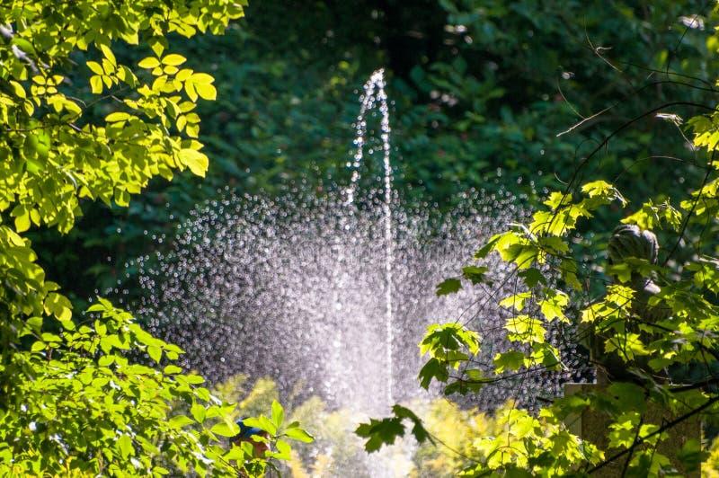 Springbrunn som kastar droppar av vatten bak träd i skog royaltyfri bild