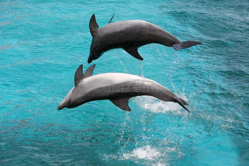 Springende Delphine stockbild