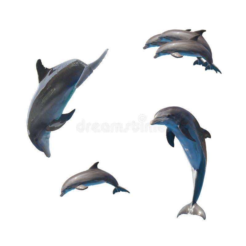 Springende Delphine auf Weiß lizenzfreie stockbilder
