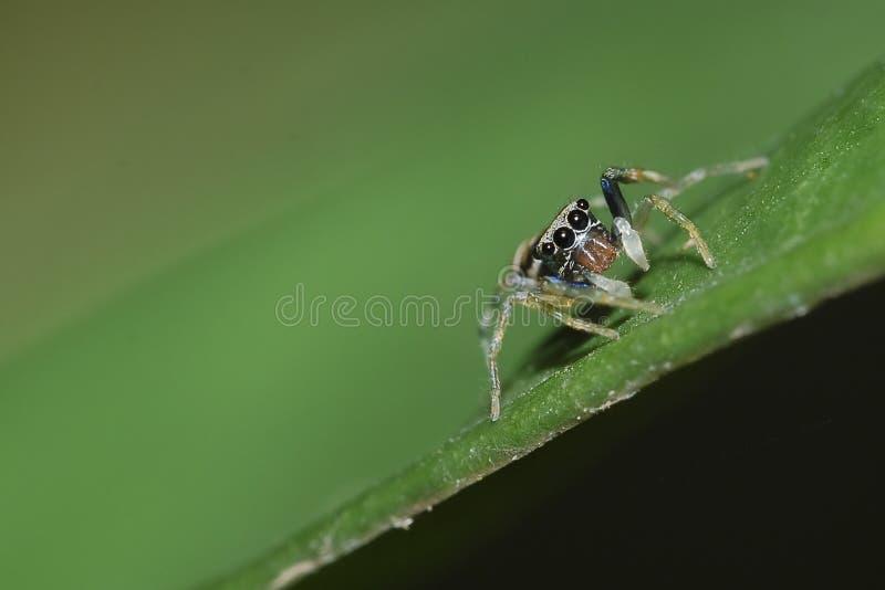 Springende spin stock foto
