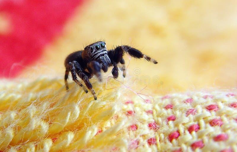 Springende Spinne stockbilder