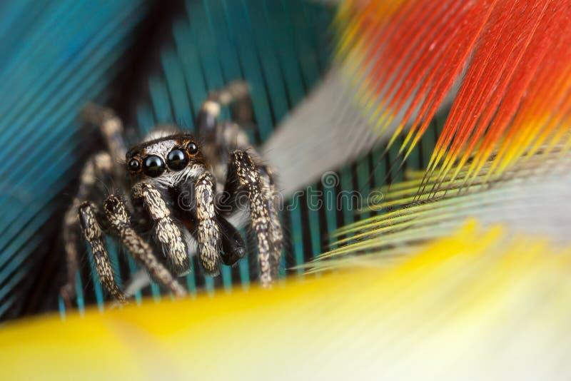 Springende Spinne und Federn stockfoto