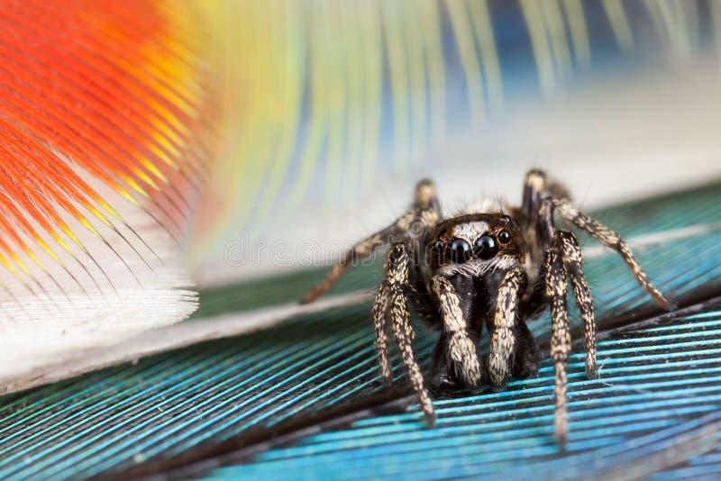 Springende Spinne und Federn lizenzfreies stockbild