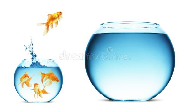 Springender Goldfish   lizenzfreie abbildung