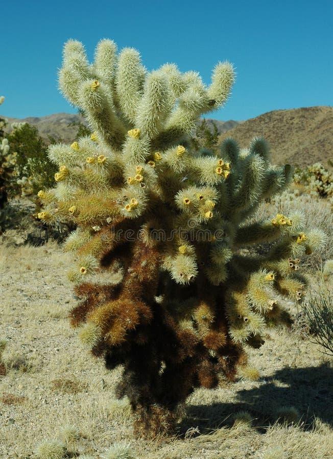 Springender Kaktus stockfotografie