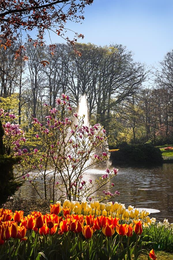 springflowers λιμνών πάρκων στοκ εικόνα