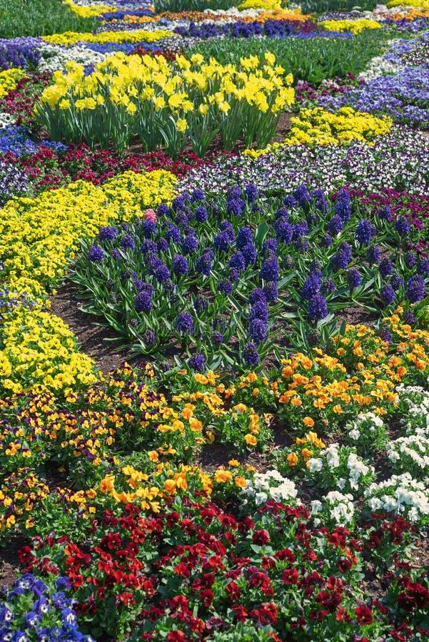 Springlike blomsterrabatt med altfioler i flera färger, påskliljor royaltyfria foton