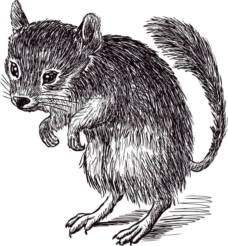 Springmuis royalty-vrije illustratie
