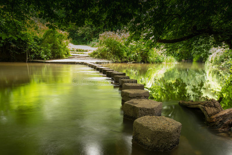 Springplanken Boxhill, Surrey, Engeland g stock afbeelding