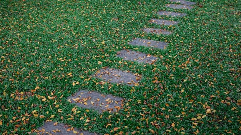 Springplankvoetpad door de herfstblad behandeld gras royalty-vrije stock fotografie