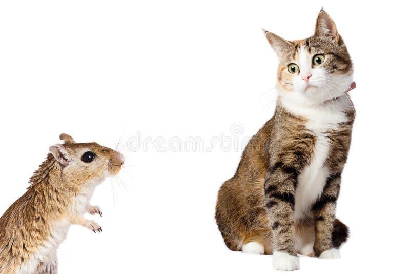 Springråttamus och förvånade Ginger Cat Isolated på vit bakgrund royaltyfri foto