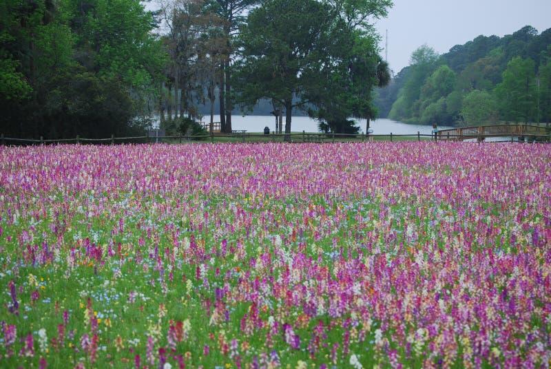 springs wildflowers polowe obrazy royalty free