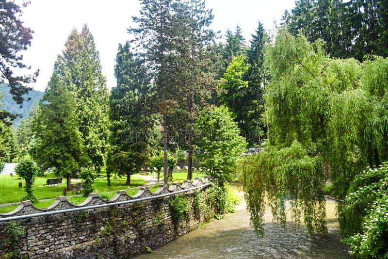 Springt de berg snelle rivier park van de overgang het stad met groene pijnbomen en wilgen in de zomer dag op De gestileerde voor royalty-vrije stock fotografie