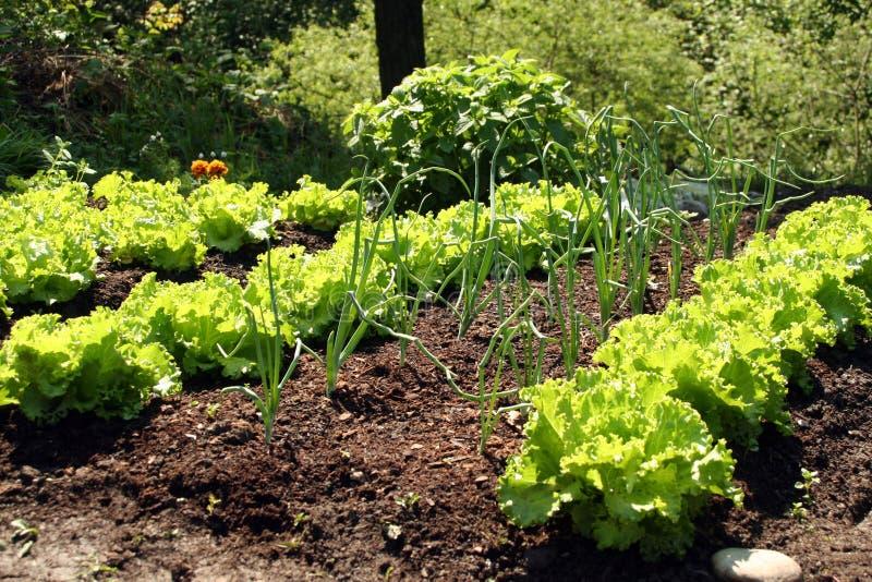 springtame warzywa obrazy stock