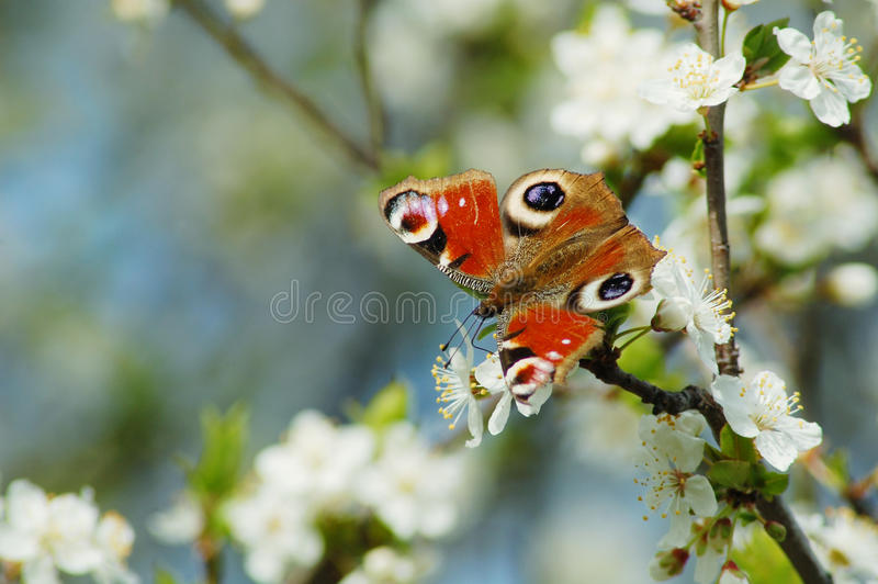 Springtime royalty free stock photo