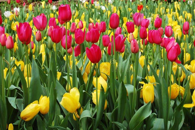 Download Springtime stock image. Image of sunshine, spring, yellow - 3884553
