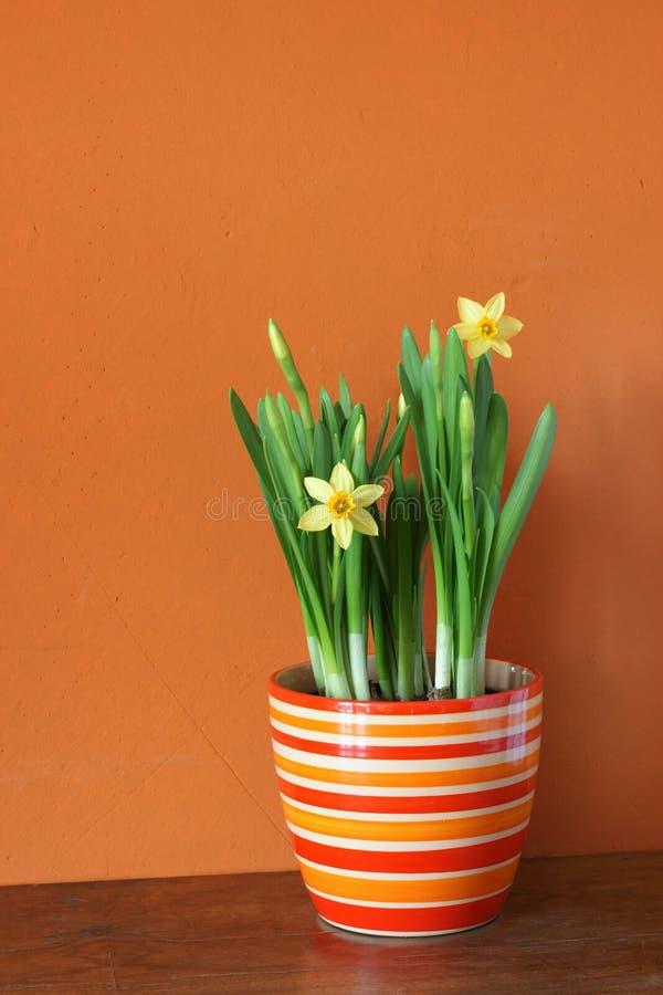 Download Springtime stock image. Image of narcissus, bunch, orange - 8061009