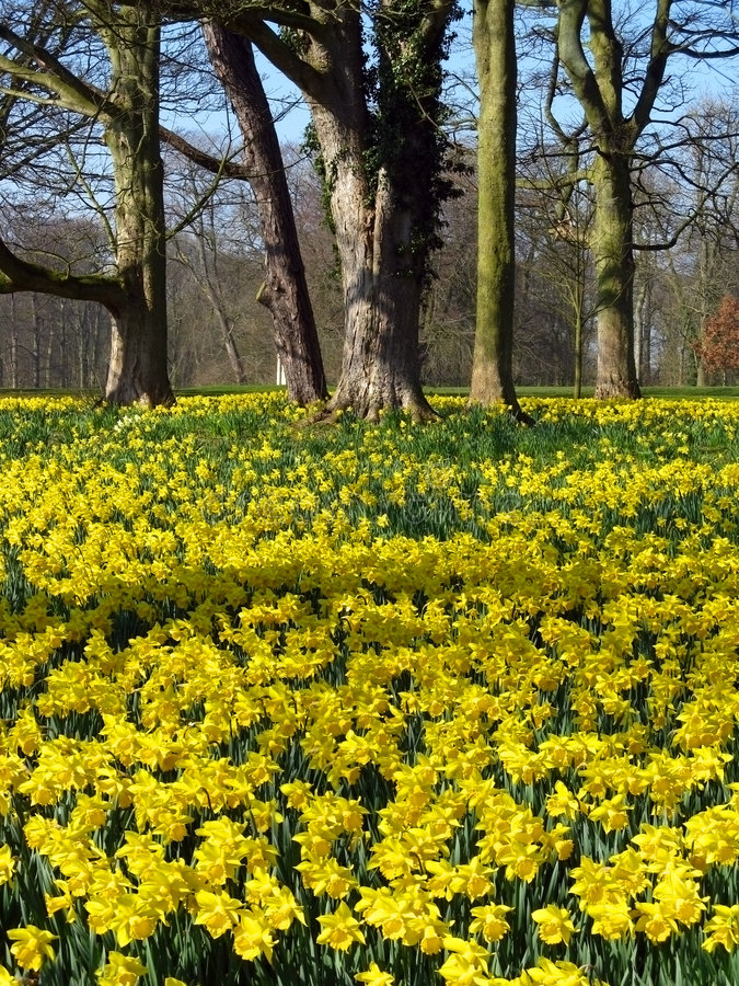 Download Springtime stock image. Image of plants, sewerby, flowers - 9001921