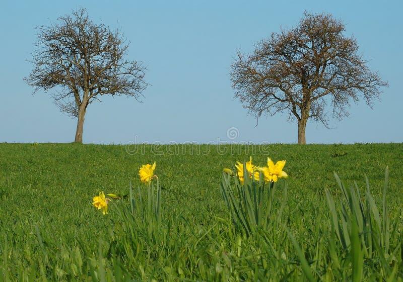 springtime arkivbilder