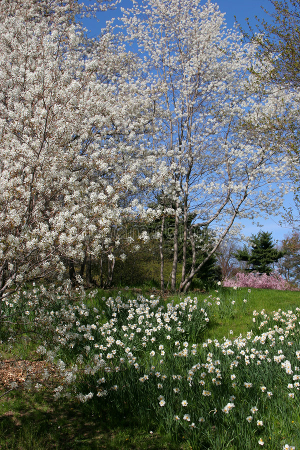 Download Springtime Blossoms stock image. Image of blooming, serenity - 727911