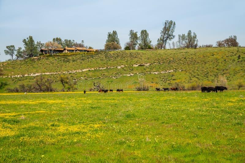 Rural scenery. California landscape royalty free stock image