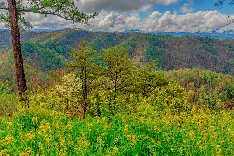 Springtime Color In The Smoky Mountains stock photo