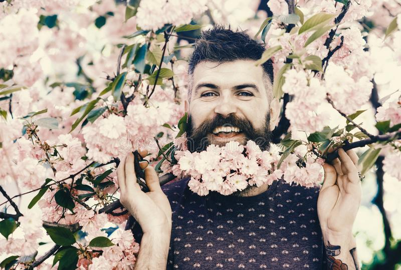 Springtime concept. Man with beard and mustache on happy face near branches with tender pink flowers. Bearded man with stock photos