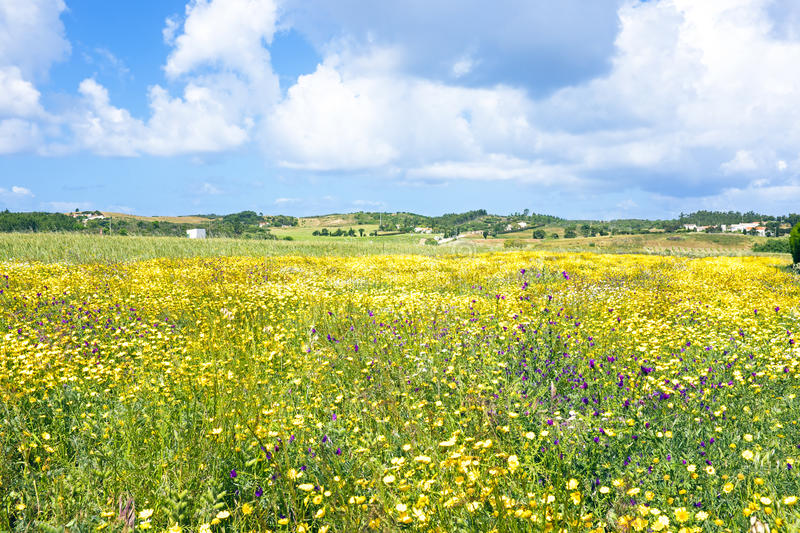 Download Springtime In The Countryside Stock Image - Image: 32182113