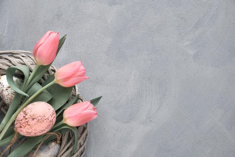 Springtime or Easter background with pink tulips and Easter eggs in wattle ring on grey concrete, text space. Springtime or Easter background with pink tulips royalty free stock photo