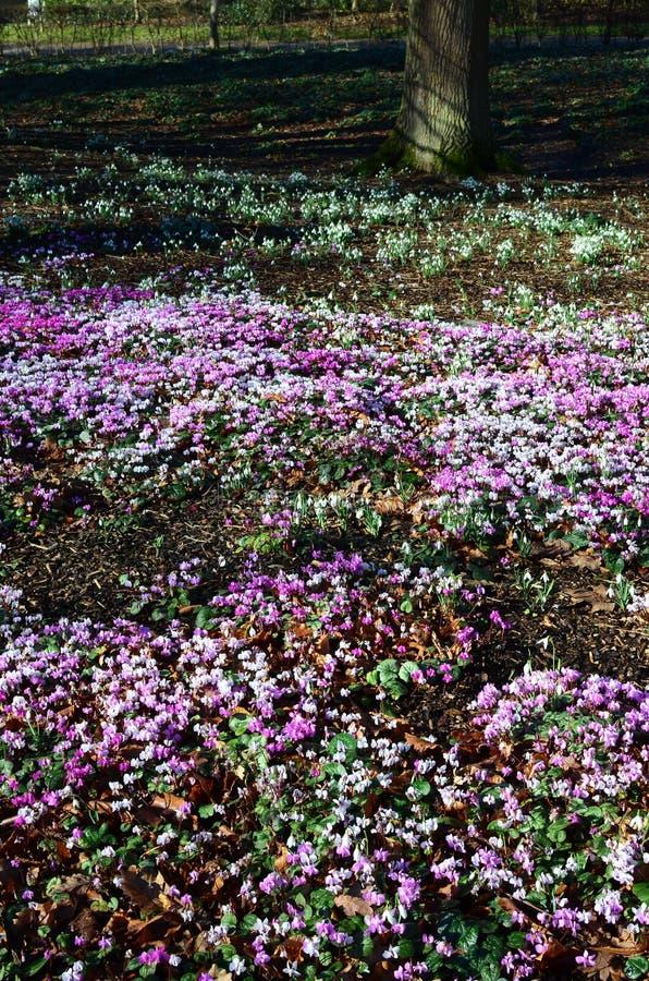 Springtime in England. royalty free stock photo