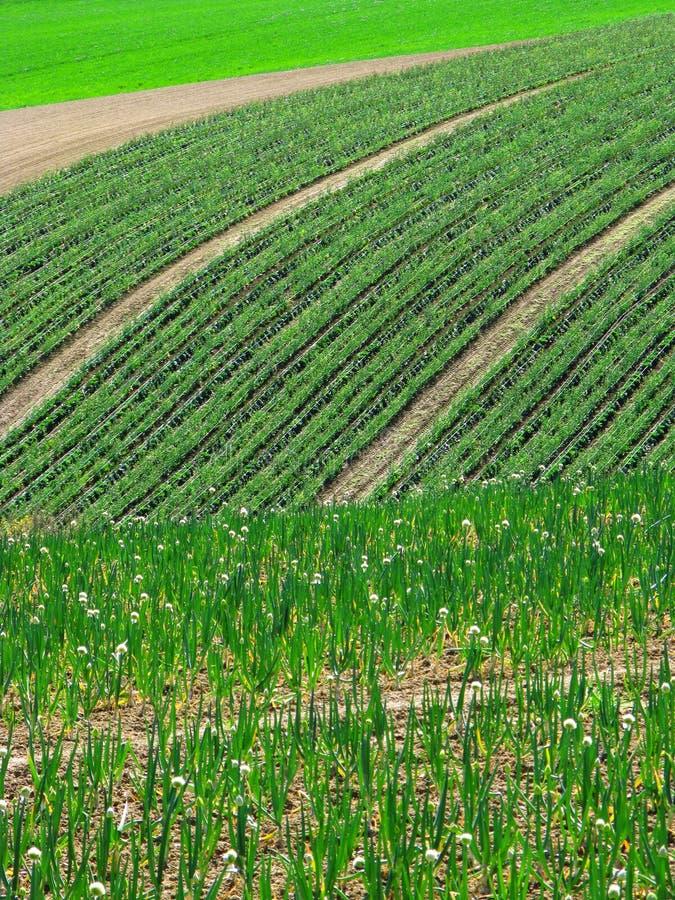 Springtime fields stock image