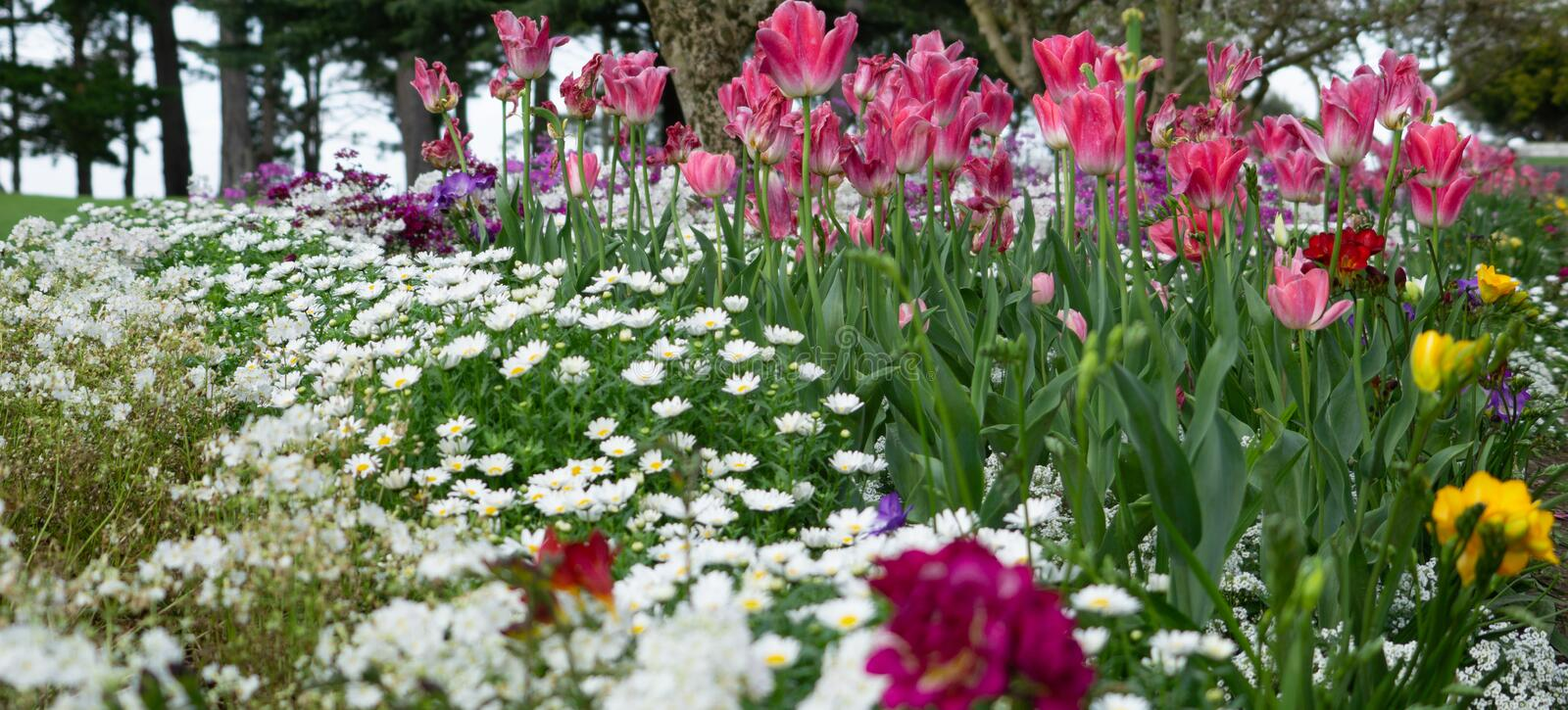 Springtime floral growth luxuriant and colorful stock photos