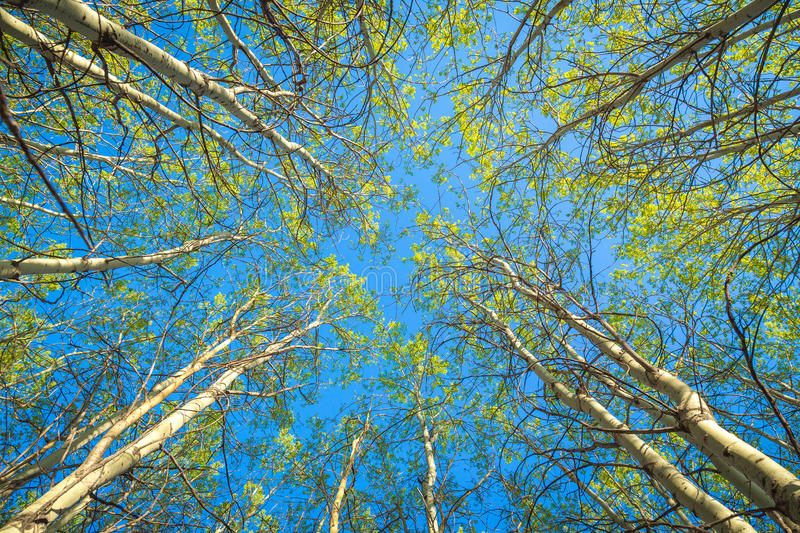 Springtime forest canopy royalty free stock photos