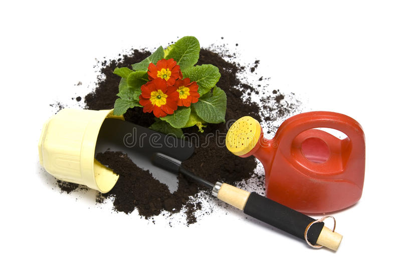 Springtime gardening. Springtime. Gardening tools, colorful primula and soil stock photography