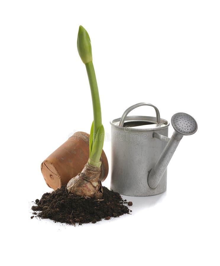 Download Springtime gardening stock image. Image of planting, gardening - 8427649