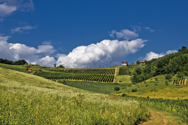 Download Springtime Green Idyllic Hill With Vineyard Royalty Free Stock Images - Image: 21028319