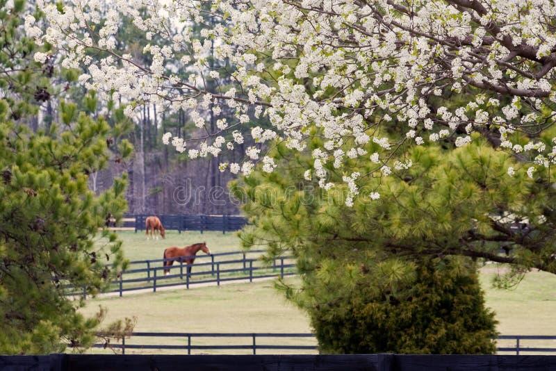 Springtime at the Horse Ranch stock photos