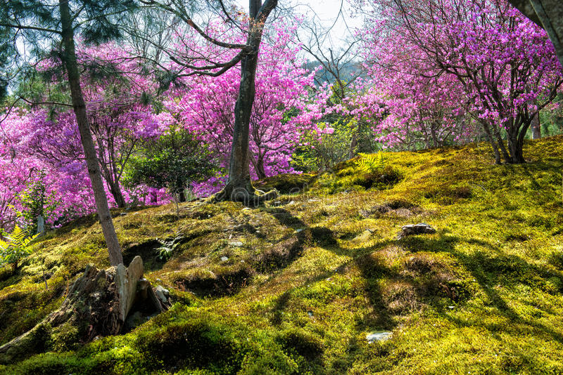 Springtime in Japan stock images