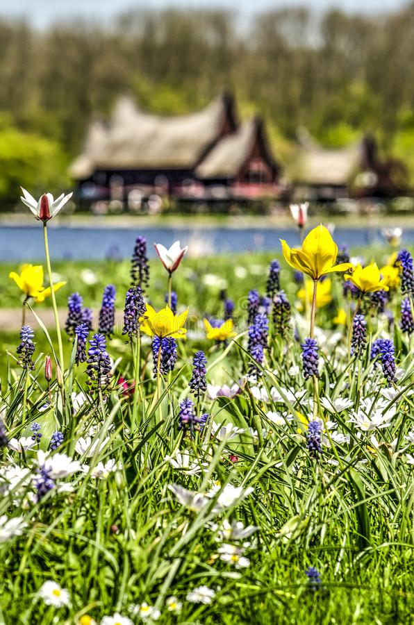 Springtime at Kralingse Plas. Rotterdam, The Netherlands, April 18, 2018: Portrait oriented close-up of a bed of spring flowers at Kralingse Plas, with stock photos