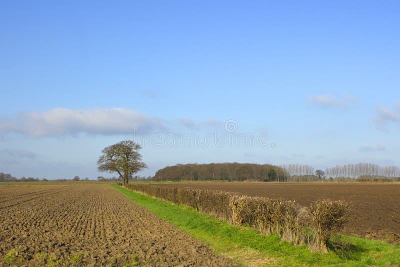 Springtime Landscape Stock Photography