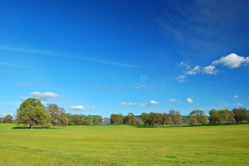 Download Springtime landscape stock image. Image of grass, plant - 676425
