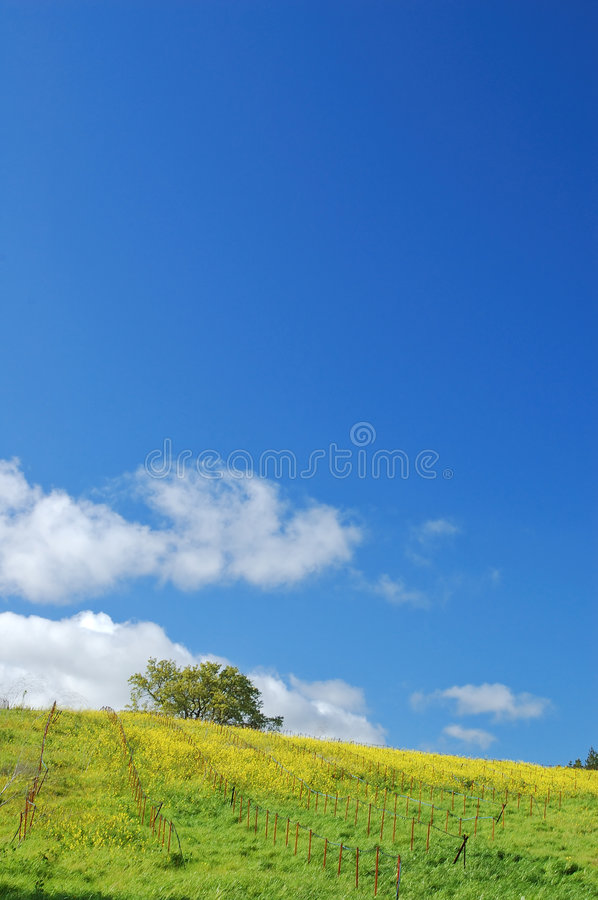 Download Springtime meadow stock photo. Image of flowers, flower - 621542