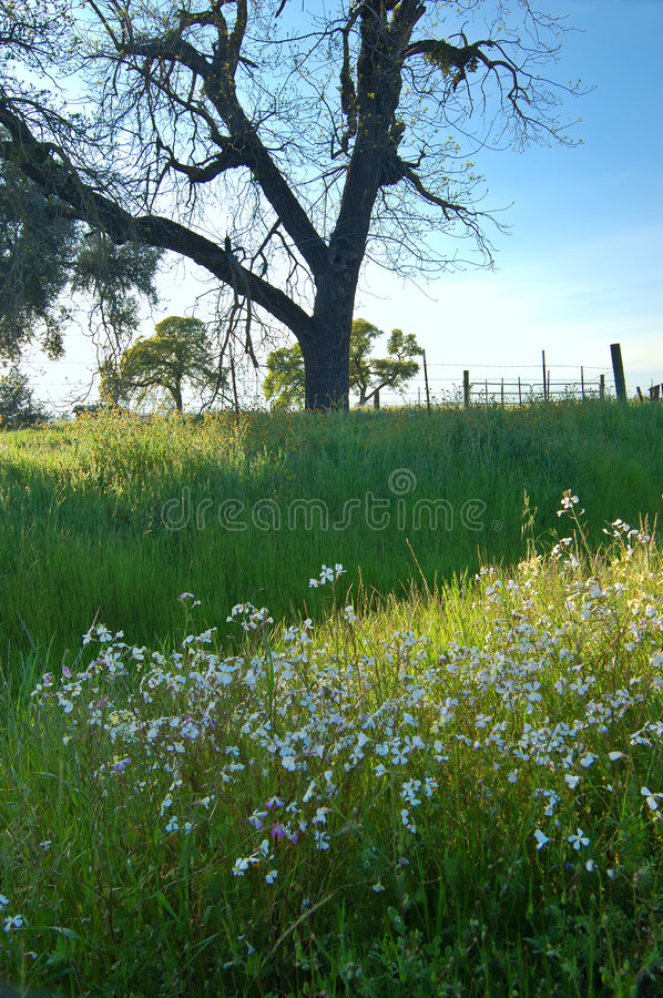 Free Springtime Meadow Royalty Free Stock Photography - 675977