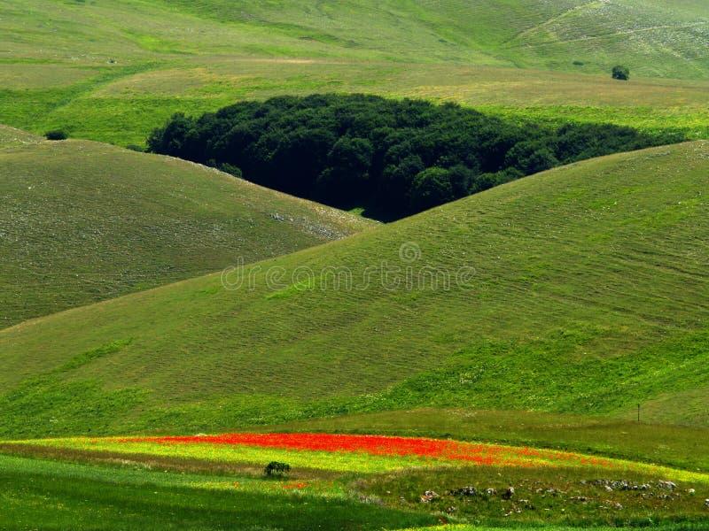 Springtime meadows royalty free stock photography