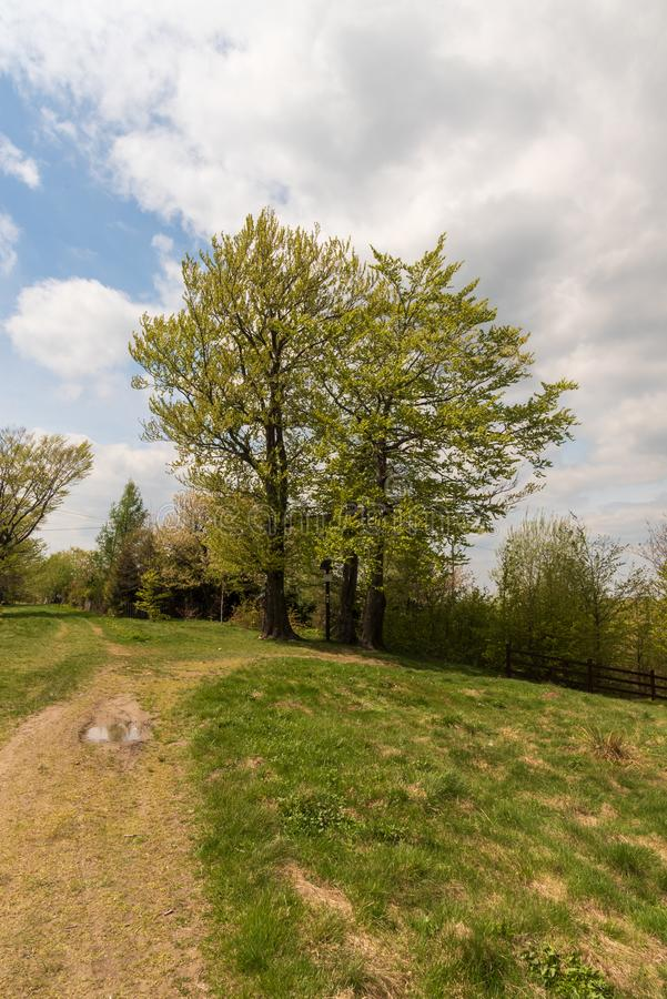 Springtime mountain scenery with trees, trail, grass and blue sky with clouds in Beskid Slaski mountains in Poland. Springtime mountain scenery with trees, trail royalty free stock photo
