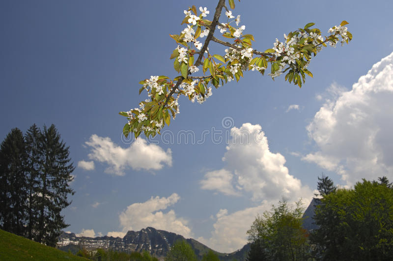 Springtime in the mountains royalty free stock photography