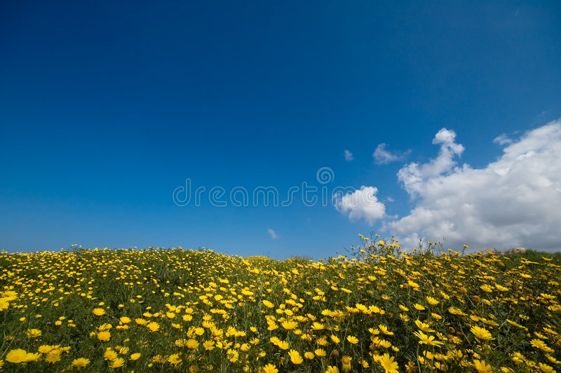 Springtime in nature royalty free stock images