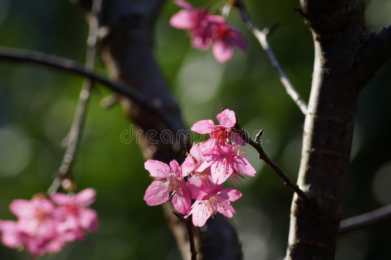 Springtime. With tree blossoms starting new life stock photography